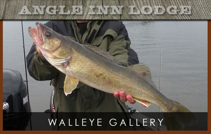 Angle Inn Lodge Walleyes Gallery