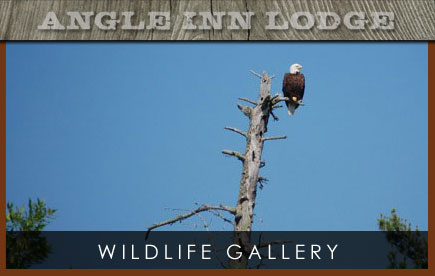 Angle Inn Lodge Wildlife Gallery